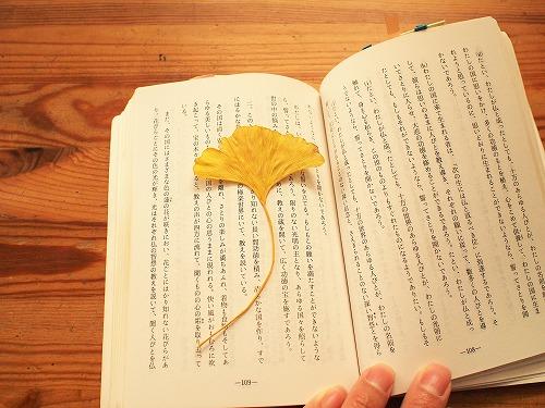 500落ち葉いちょうと本