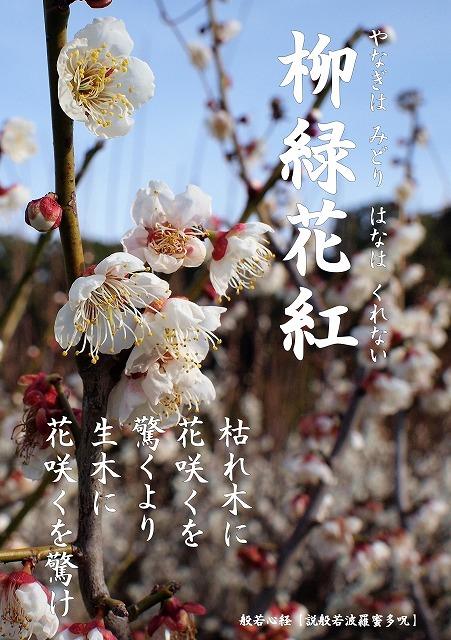 500写経会 絵葉書49