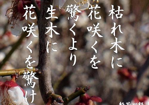 500写経会 絵葉書492