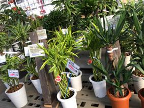 観葉植物b