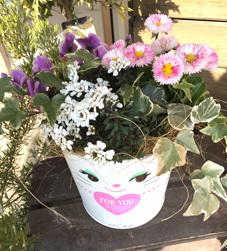 フラワーバレンタイン 寄せ植えa