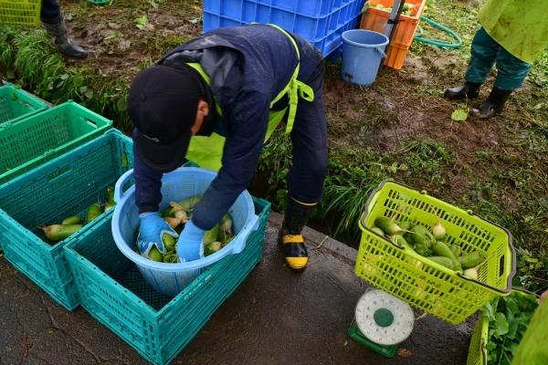 2017年10月29日 上田市前山 うえだみどり大根大収穫祭