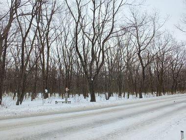 04那須高原の情景雪景色0111