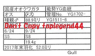 Gull-1702-22証明113