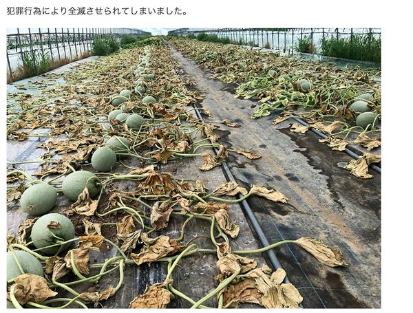 寺坂農園 メロン 被害 除草剤