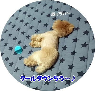 DSC_4008 (2)