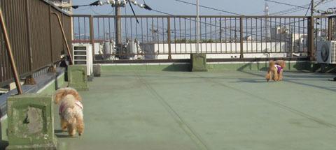 屋上で日光浴1