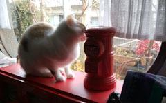 0214 警備猫a