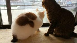 0119 3Fから外を眺める兄弟猫