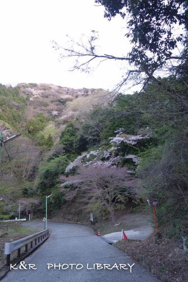 2017年4月16日 大山2