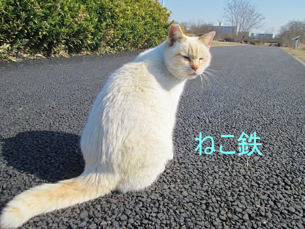 IMG_3239jidou_1.jpg