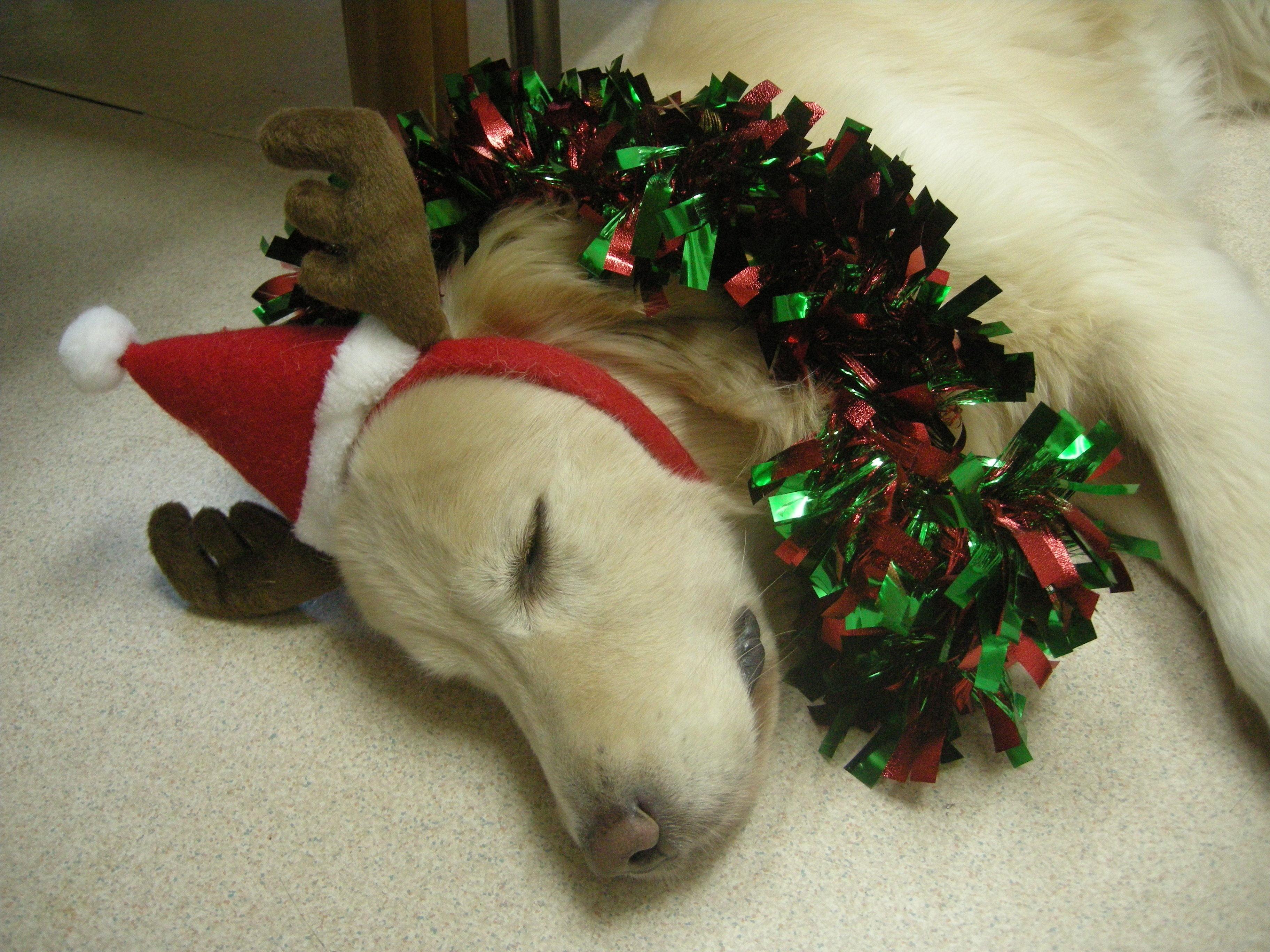 クリスマス寝サニー