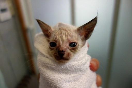 赤ちゃん子猫-c DSC00029
