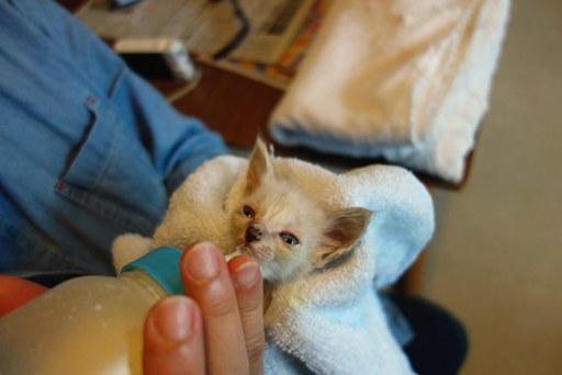 赤ちゃん子猫-e DSC00055