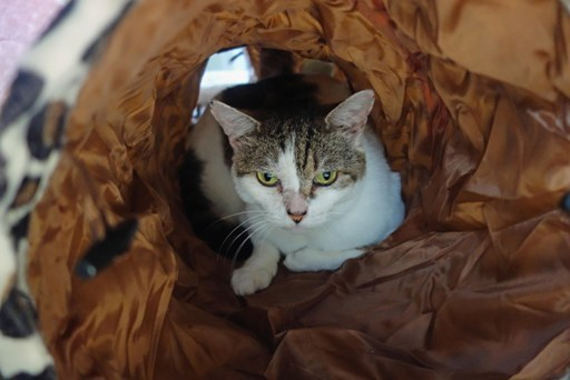 猫トンネル-d DSC00897
