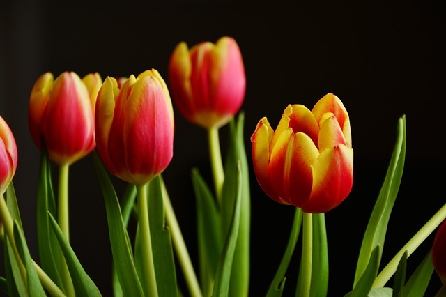 tulips-2048324_640.jpg