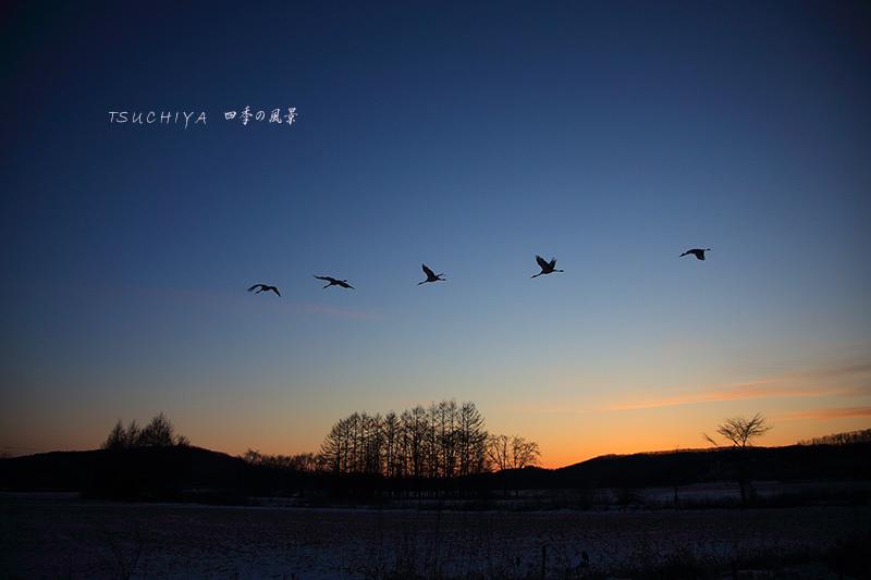 夕日と丹頂