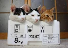 猫 箱入り2