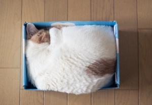 猫 箱入り3