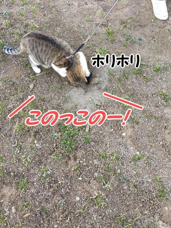 S_7245351545896.jpg