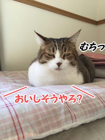 S_7245351669504.jpg
