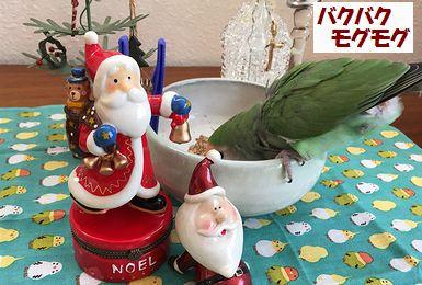 2017クリスマス4
