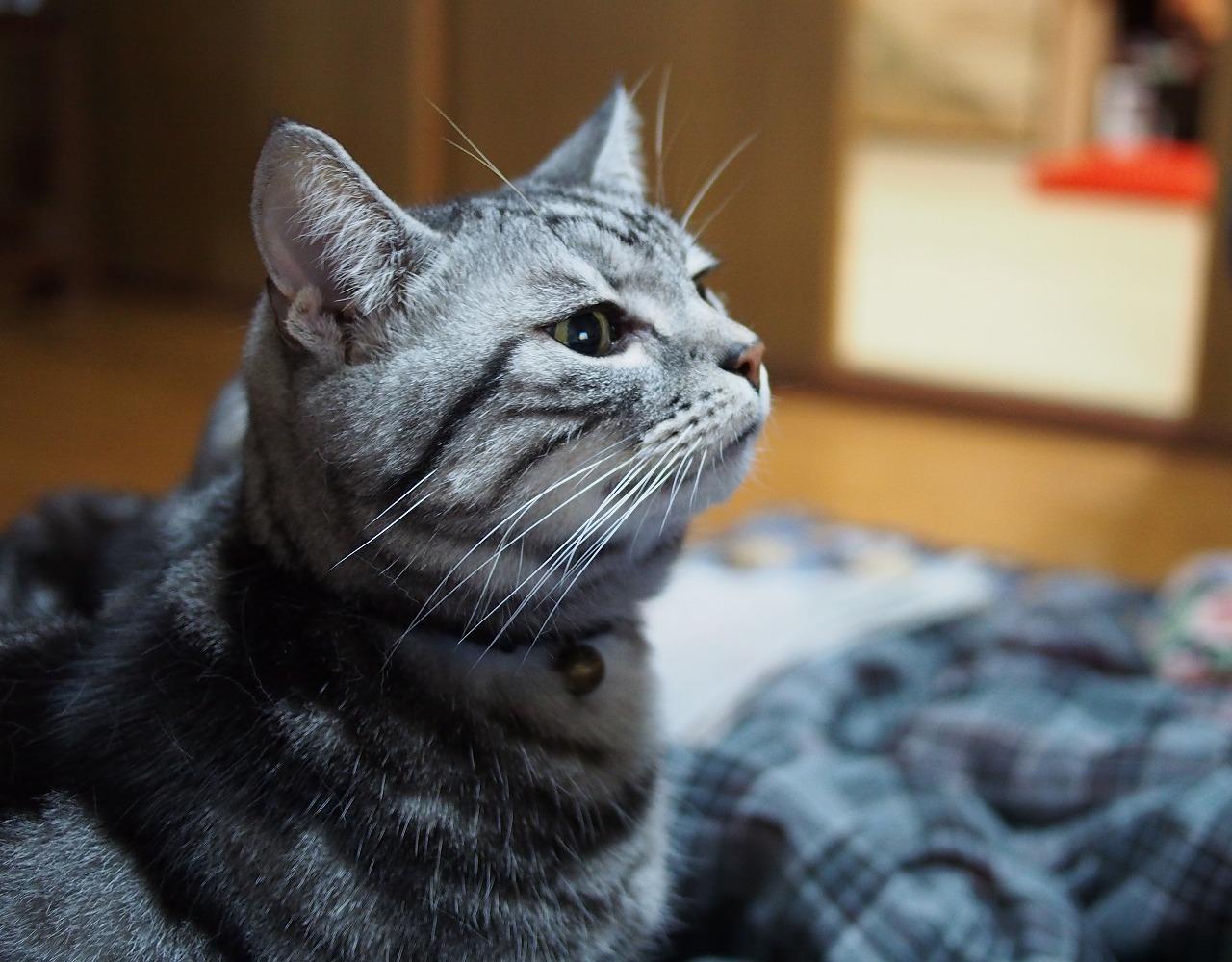 20180101-Cats-O01.jpg