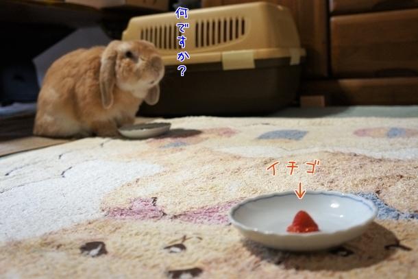 美味しいイチゴもらったよ♪1