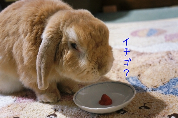美味しいイチゴもらったよ♪2