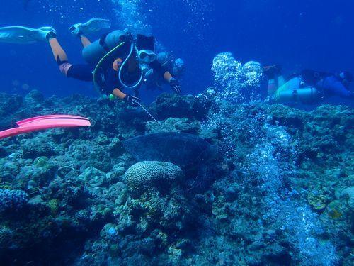 沖縄那覇市観光おすすめプラン平成30年2018年体験ダイビング未経験者初心者高齢者泳げない楽しめる