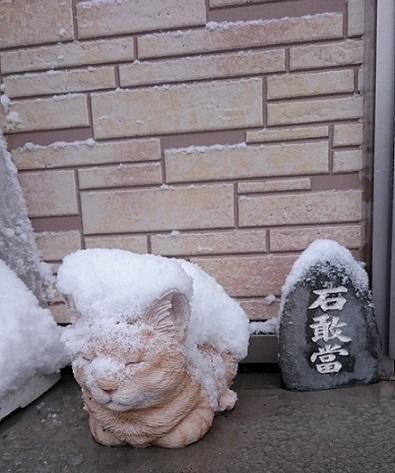 雪の中のたまのじょう