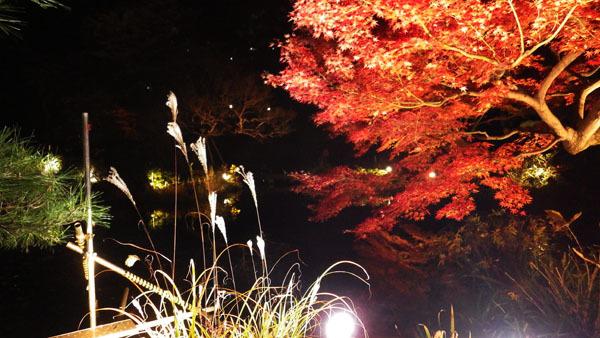 肥後細川庭園 ススキと紅葉