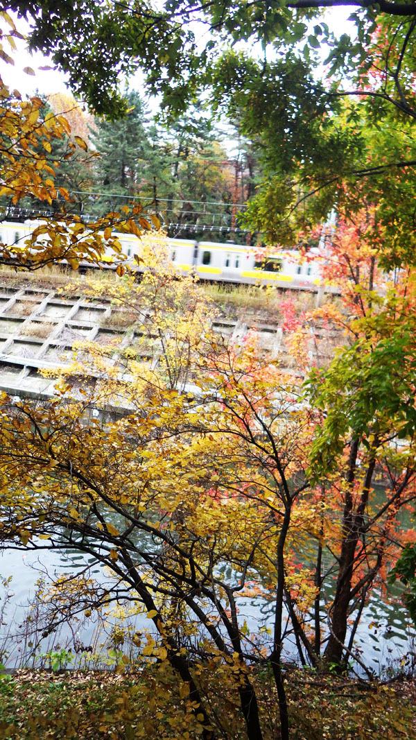 市ヶ谷壕の秋
