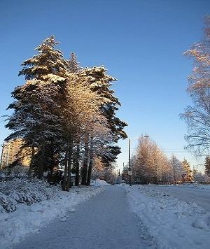 白い木と青空