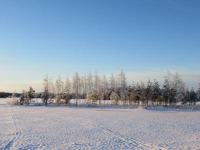 湖と白い木立
