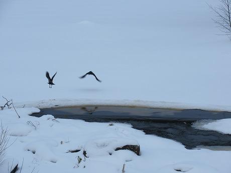 川と雪と鳥