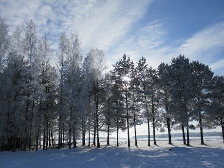 白い木々1