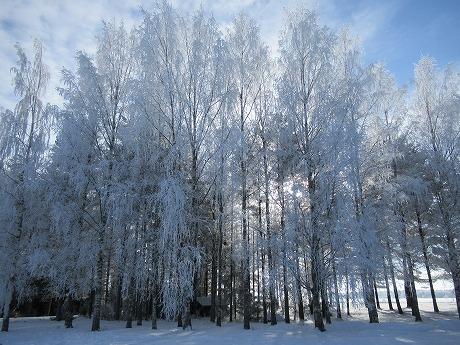白い木々2