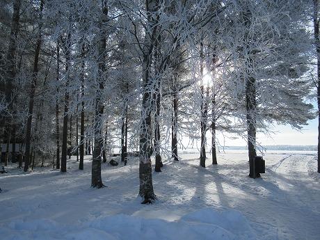 白い木々3