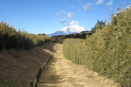 ハコネダケと富士山