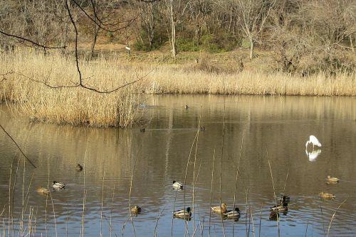 氷が解けた池