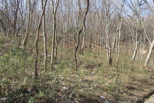 雑木林の山