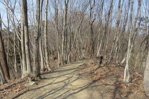 雑木林の続く道