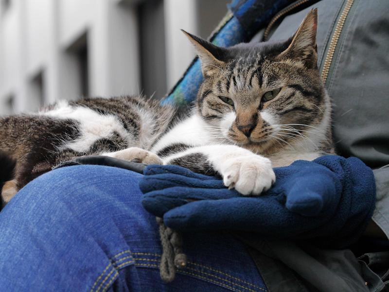 フリース手袋とキジ白猫1