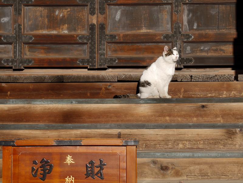 浄財箱と白キジ猫