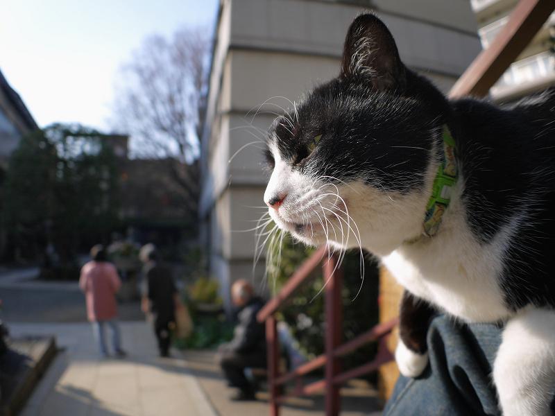膝に乗って日向ぼっこしてる黒白猫2