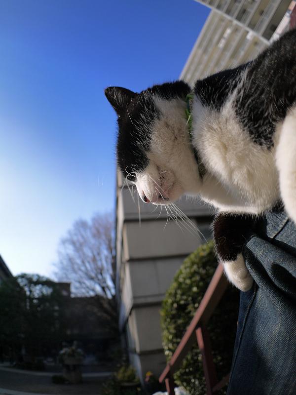 膝に乗って日向ぼっこしてる黒白猫3