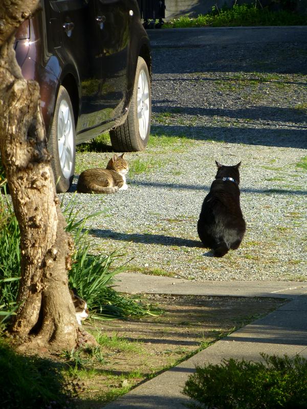 庭と猫たち1