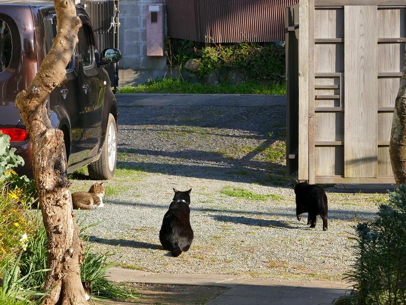庭と猫たち3
