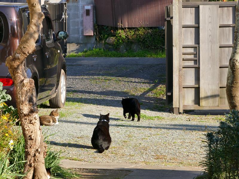 庭と猫たち4